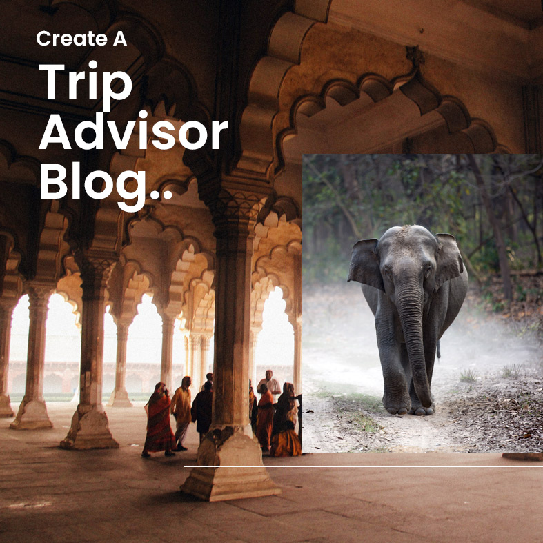 Create A Trip Advisor or Tour and Travels Blogging Site